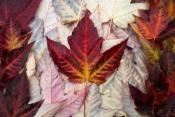 Canada flag by mgabelmann via Flickr